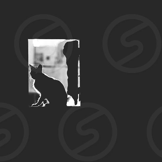 Cat Sitting on Window photo