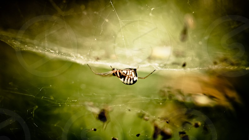 white and black spider on spider web photo