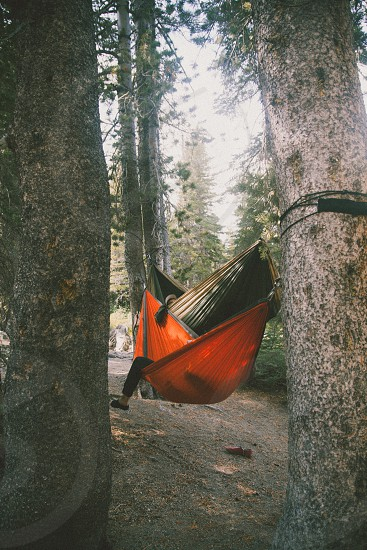 orange swing in the middle of trees photo