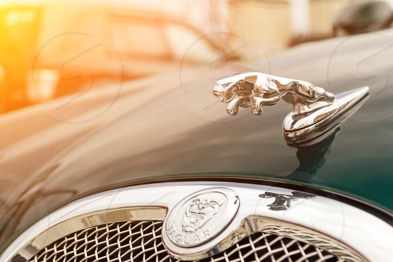 Novosibirsk Russia - 06.28.2018: The chrome-plated emblem in the form of an animal jaguar on a hood brightly green Jaguar S-type 2007  photo