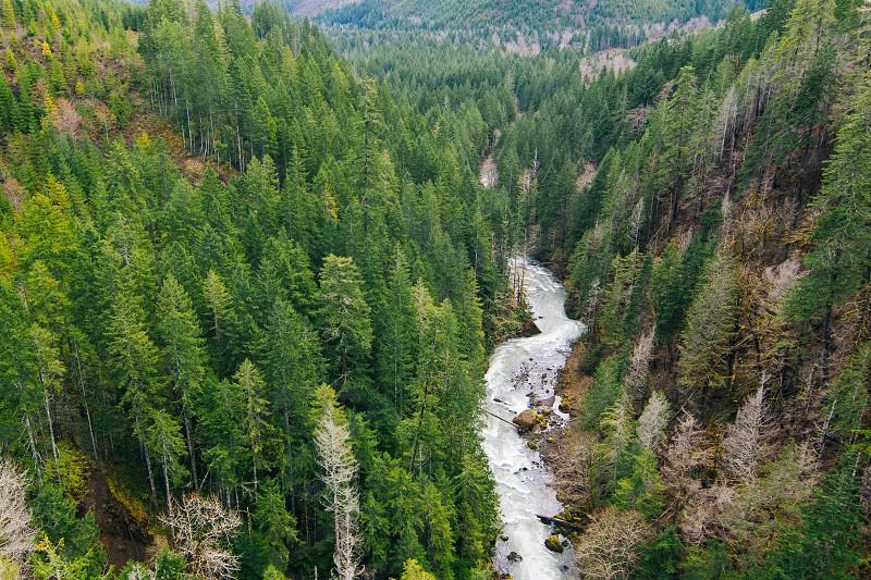 green pine tress photo