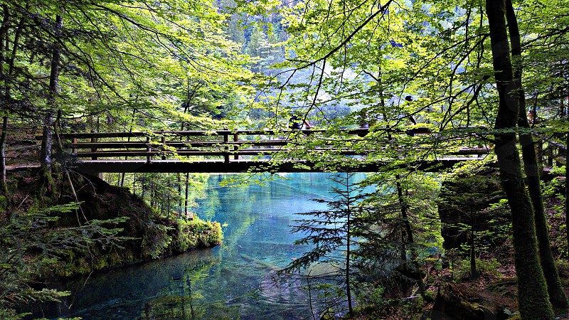 wooden bridge near body of water surrounded trees during daytime photo