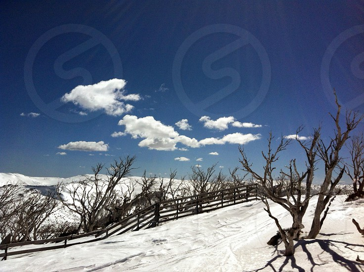 view of dried trees and snow photo