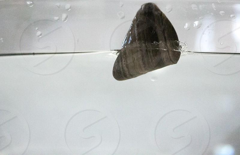gray triangular stone on water surface photo