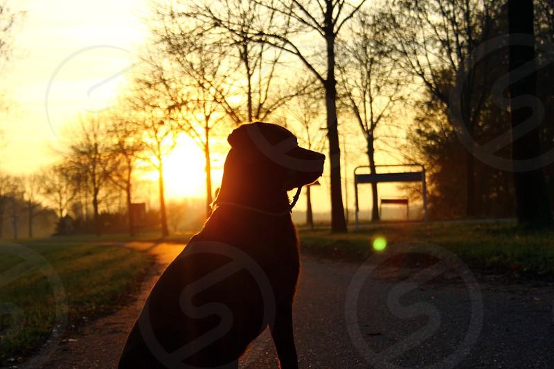 black silhouette of dog on gray asphalt road photo