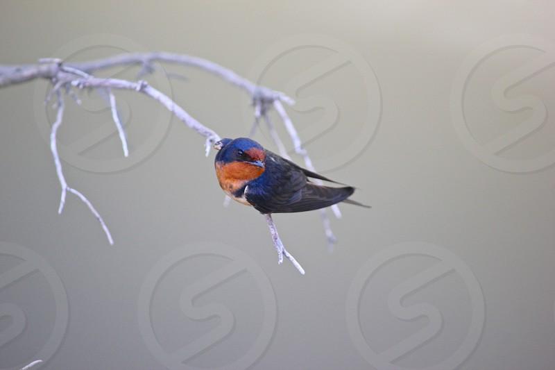 Bird on a branch. photo