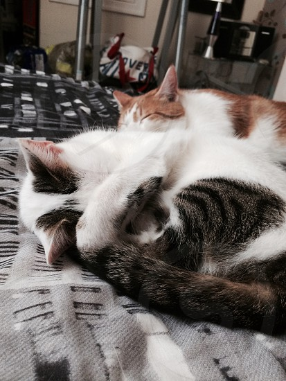 "Ollie and Harvey. ""Sleepy cats"" photo"