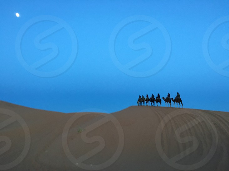 person riding camel at desert during daytime photo