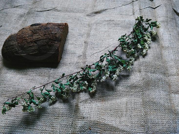 Borodino bread and dry twig photo
