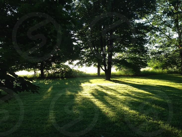 Morning sun rays breaking through trees photo