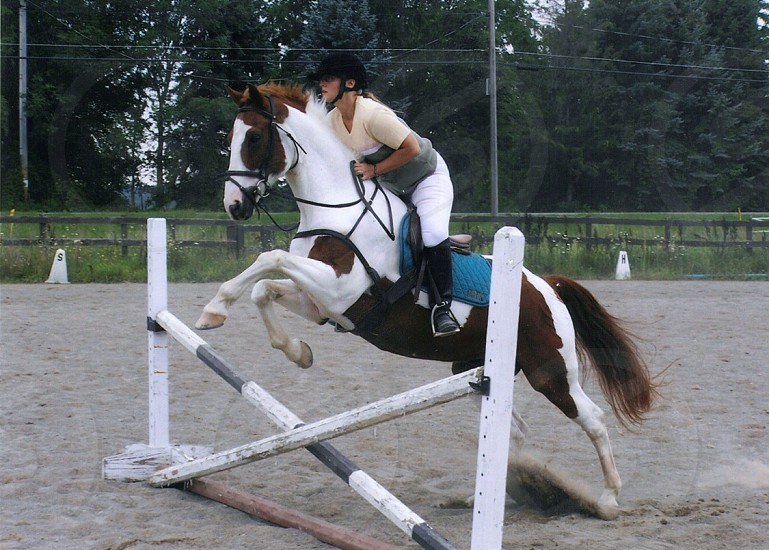 woman riding white/brown horse over obstacle photo