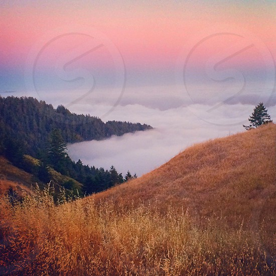 fogy forest view photo