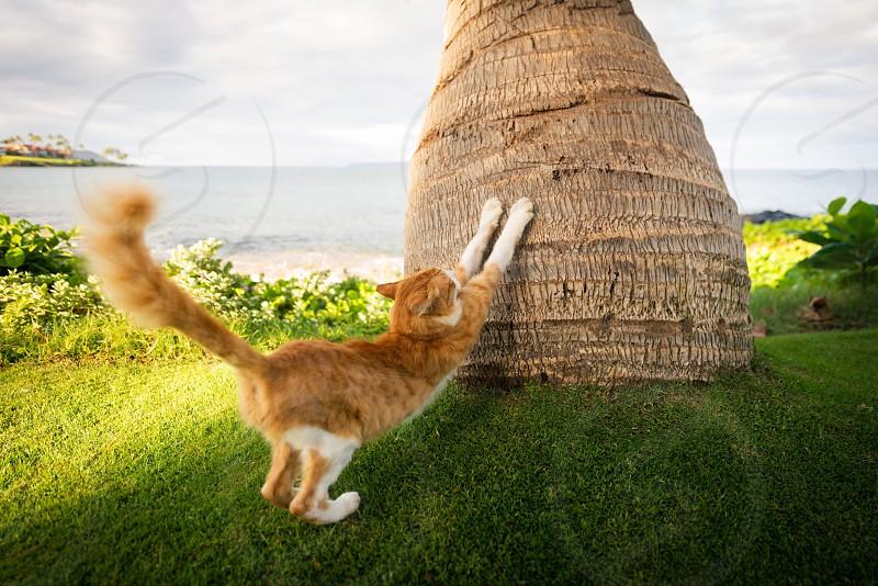 A cat  photo
