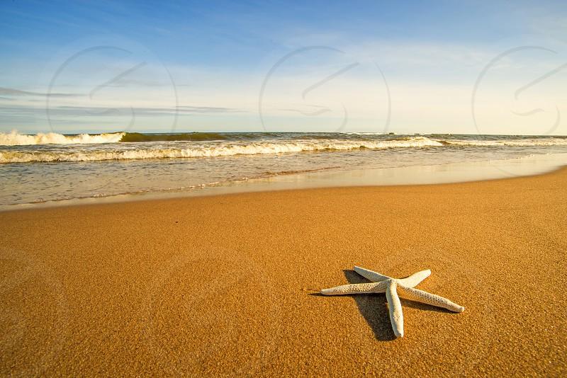 Sea star on a beach with surf photo