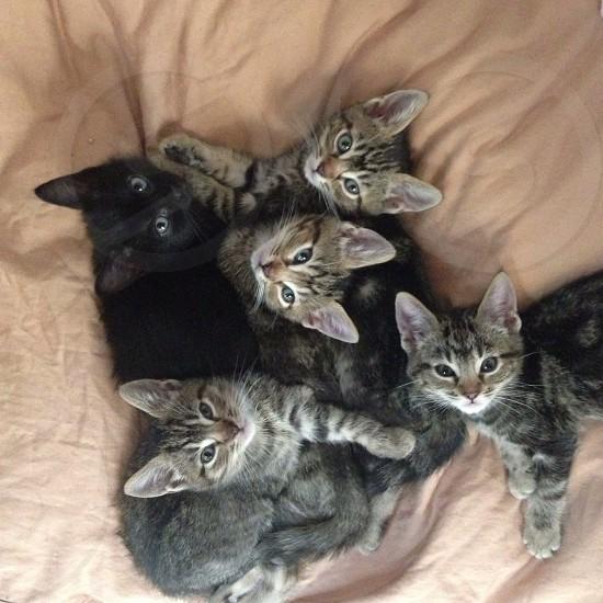 5 kitten lying on textile photography photo