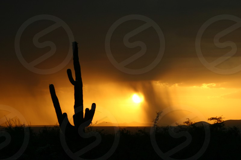 Cactus Rain Sunset photo