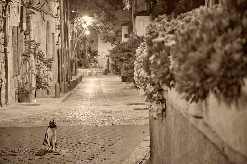 walk in Old Yaffo  Israel  photo