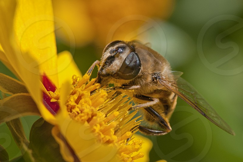 macro insect bee photo