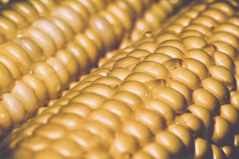 yellow corns photo