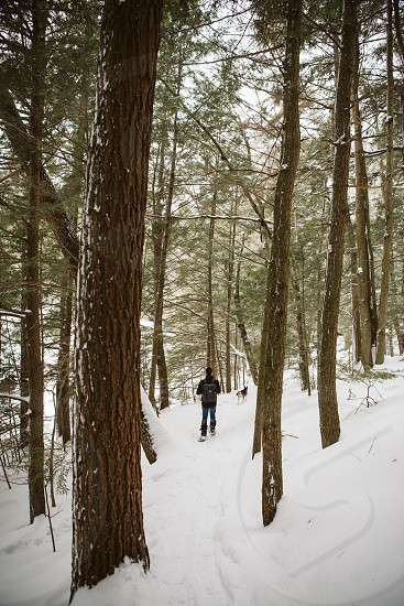 Young man snowshoeing through a snow covered forest trail in the middle of winter. photo