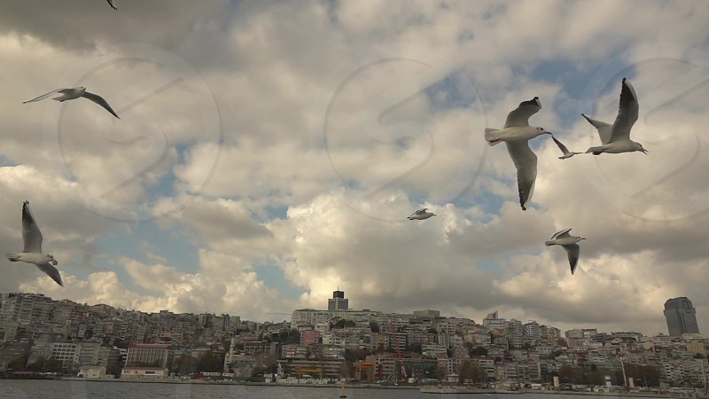 Panoramic view of bank of Bosphorus strait in Istanbul and flying seagulls bird on a background of cloudy sky. Slow motion Full HD video 240fps 1080p. photo