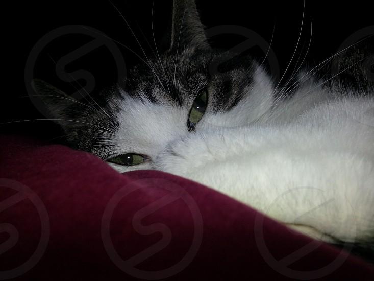 Green-eyed kitty photo