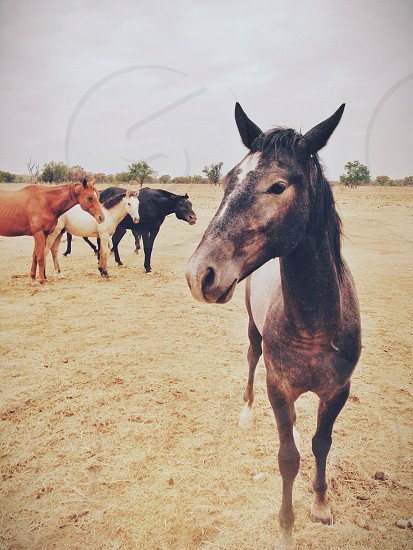 four horses on field photo