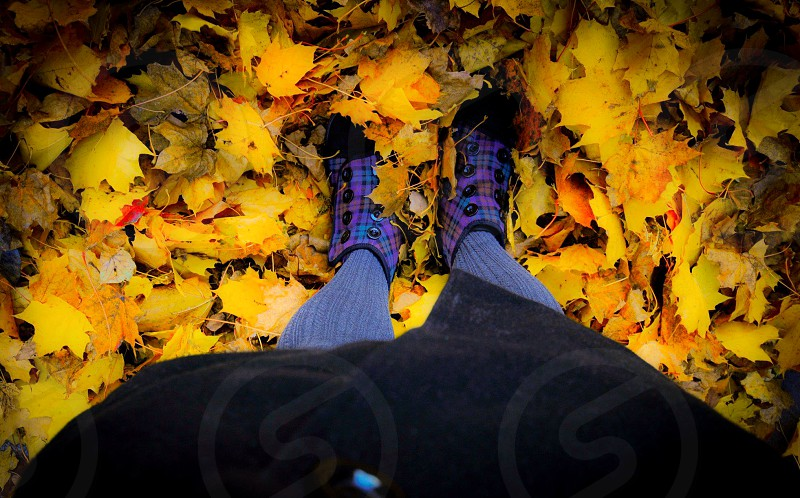 Colors fall photo