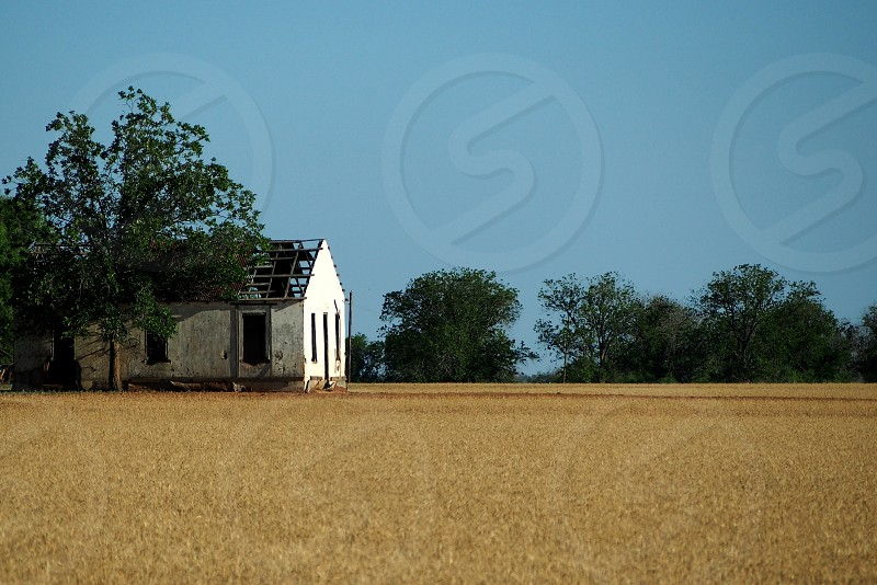 An abandoned house sits in a West Texas field. photo