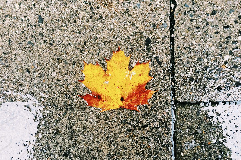 colorful fall leaf on rainy sidewalk photo