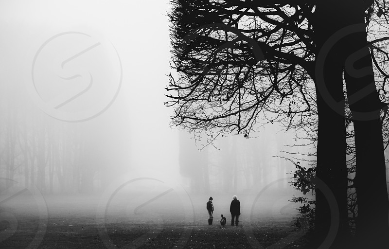 Street photography park fog foggy morning people dog walking the dog silhouette  trees branches photo