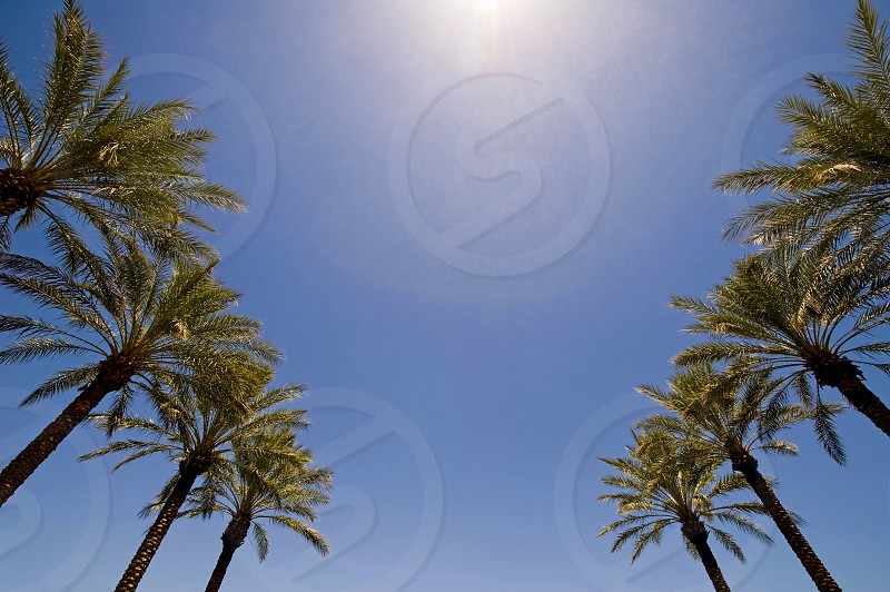 3d; air; atmosphere; beach; beautiful; blue; coast; environment; exotic; green; harmony; holiday; horizon; island; isolated; landscape; leaves; mood; nature; object; ocean; palm; palmtrees; paradise; recreation; reflection; relax; render; rest; romantic; sand; scenery; sea; shade; shadow; sky; summer; summertime; sunny; sunset; tranquil; travel; tree; tropic; tropical; trunk; umbrella; vacation; water; white photo