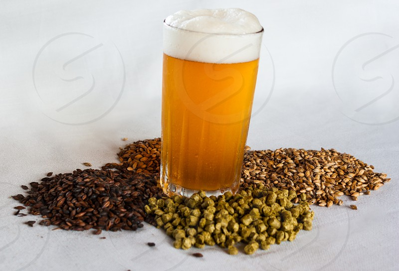 Especial bitter beer malta hops and barley over a withe background. photo