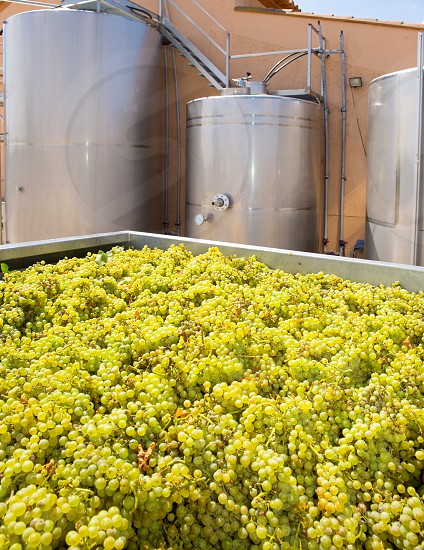 chardonnay winemaking with grapes and Fermentation stainless steel tanks vessels photo
