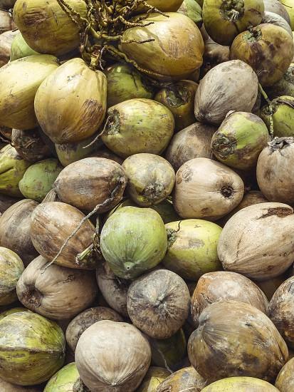 Pile of coconuts Vietnam. photo