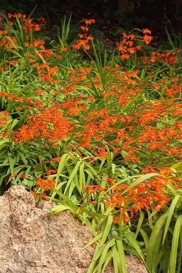 Japanese garden San Francisco photo