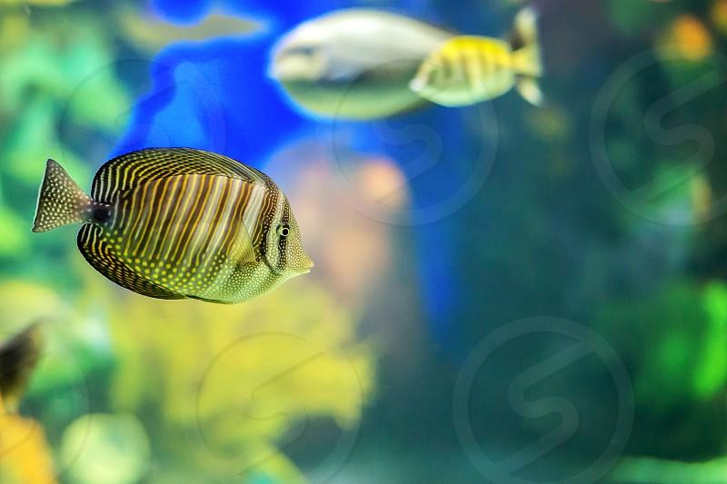 Bright  colourful fish swimming underwater. photo