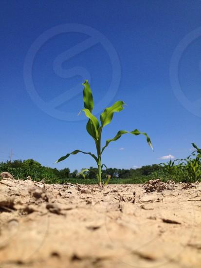 Indiana growing photo