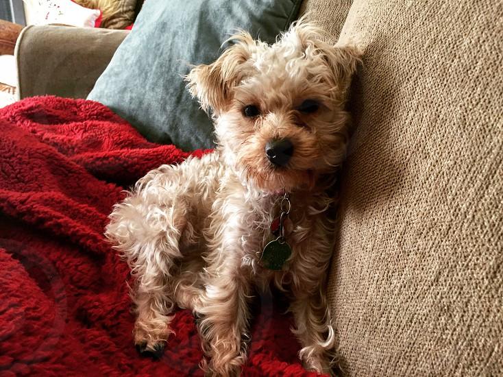 My pup Penny Lane. Dog Model. photo