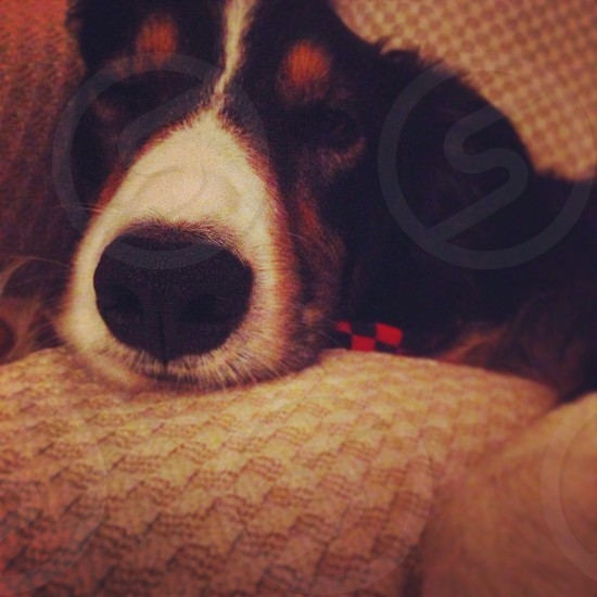 My dog Olly. photo