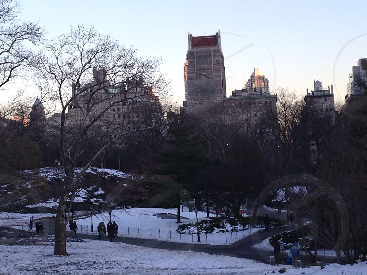 The Plaza Hotel from Central Park photo