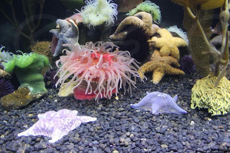 assorted-color sea corals photo