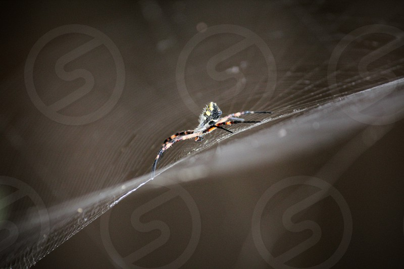colored spider on its web photo