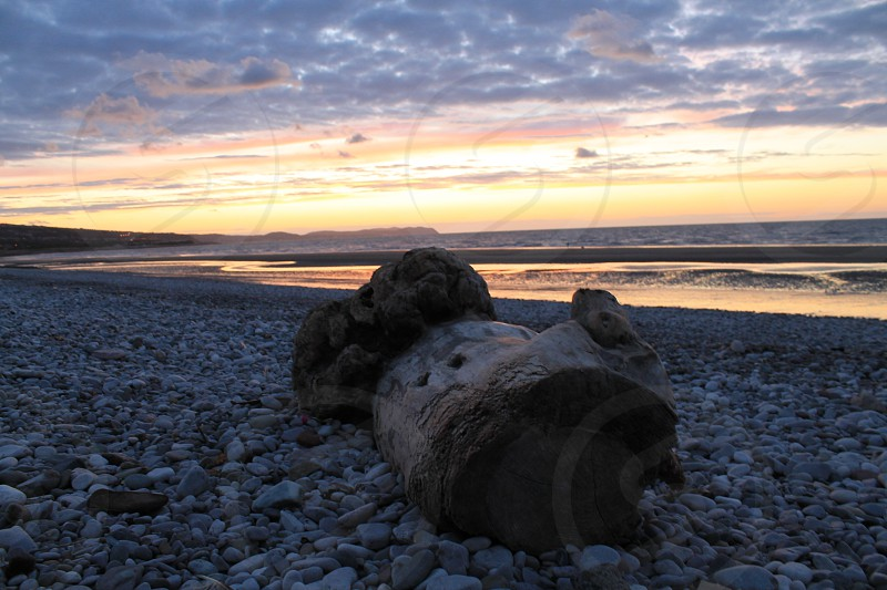Driftwood on the beach in north wales  photo
