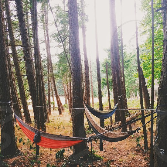 3 hammocks in the forest photo