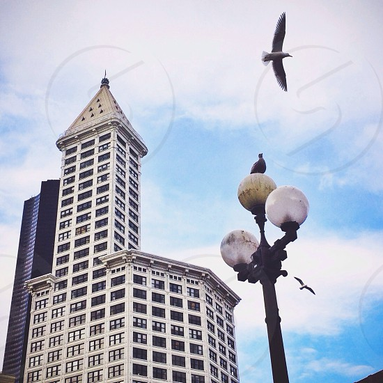 flying bird above black light post photo