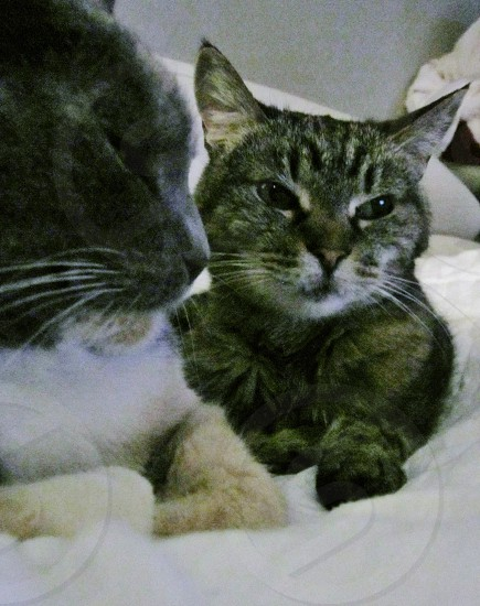 Best friend stayed side by side before Kitty passed of cancer. photo