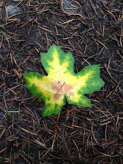 Forest park Oregon leaf colors ground yellow green red orange maple photo