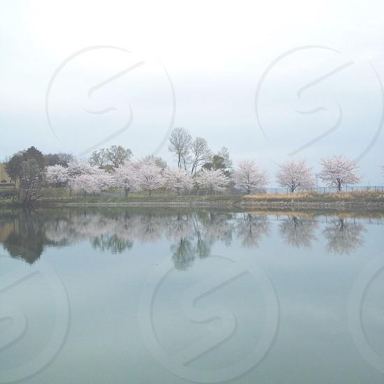 white leafy tree near lake photo