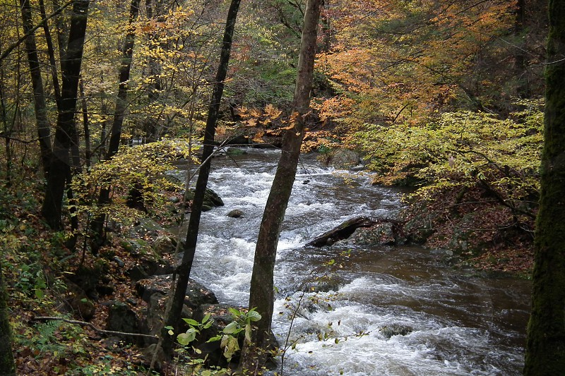 North Carolina photo